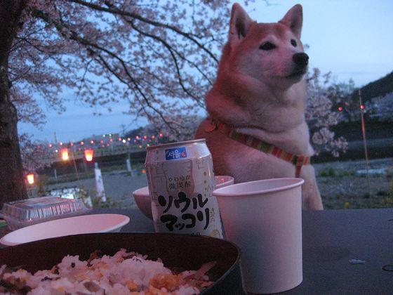 桜を肴にグビ~っと♪