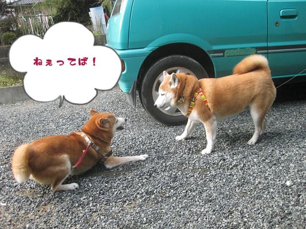 遊ぼうよ!