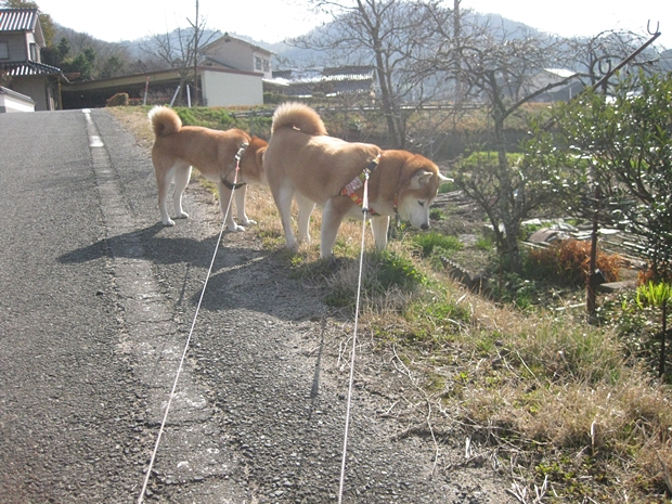 一緒に散歩