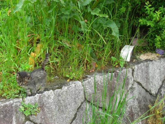 2010-5-20+022_convert_20100524143036.jpg