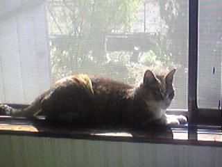 日向ぼっこ猫くん