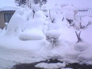 091215降雪