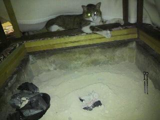 掘りごたつ猫