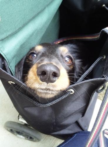 110527_in bag