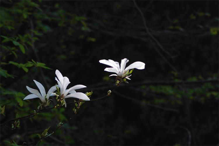 0517-d.jpg