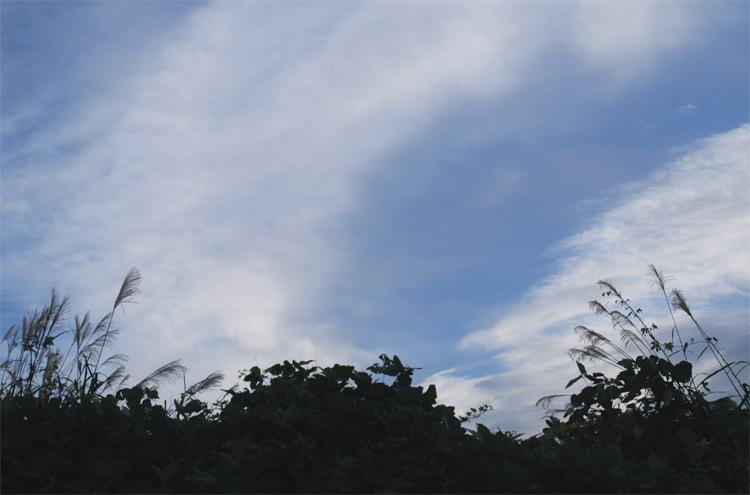 91009-10.jpg