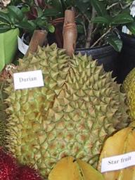 ARS_Durian.jpg