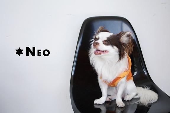 Neo1-2_s.jpg