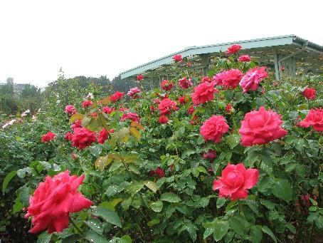 大船植物園09_09