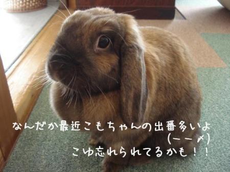 寂しげこゆちゃん