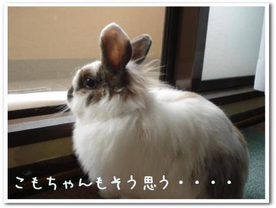 koyukomo.jpg