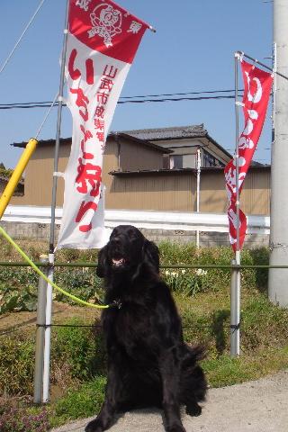 ichigo1-4-9.jpg