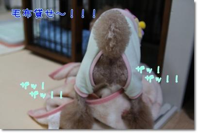 7_20090225183334.jpg