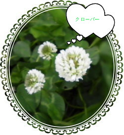花ブ59-4