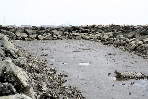 旧江戸川河口2