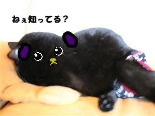 豆しば~♪