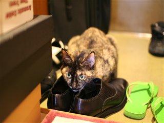 靴とラーラ1