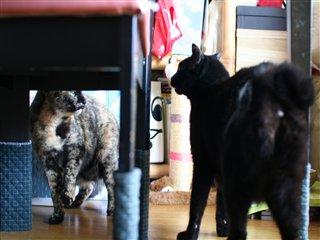 ミレニとラーラ☆バトル