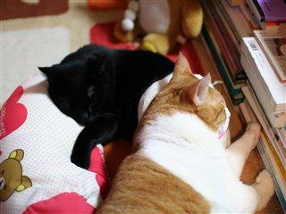 おしり枕1