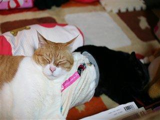 おしり枕2