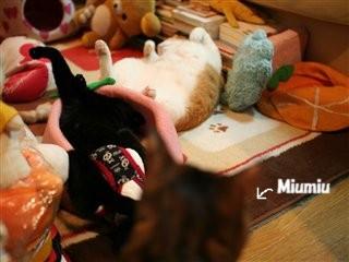 Miumiu目線