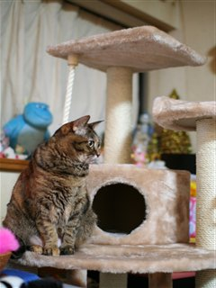 Miumiu on the new tower