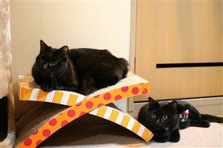 なかよし黒猫
