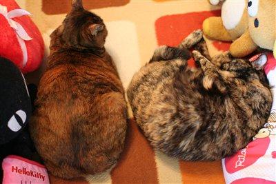 Miu&ラーラ