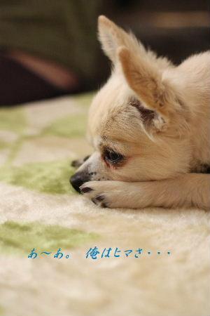 2009_1028千恵 日記0005