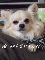 2009_1104千恵 日記00010