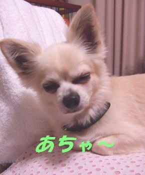 2009_1130伊万里0005
