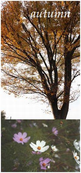 2009_1127aki.jpg