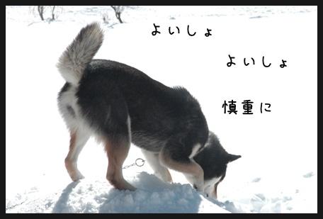 DSC_0100のコピー