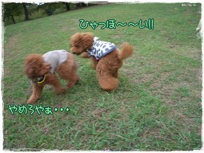 20090927blog14.jpg
