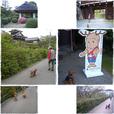 20100418blog12.jpg