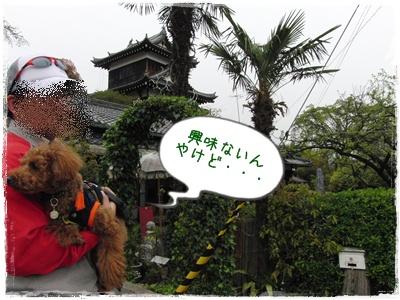 20100418blog3.jpg