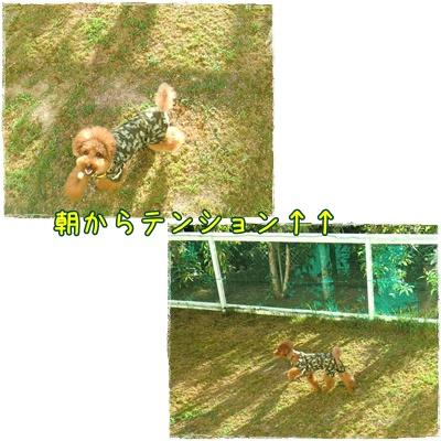 20100904blog6.jpg