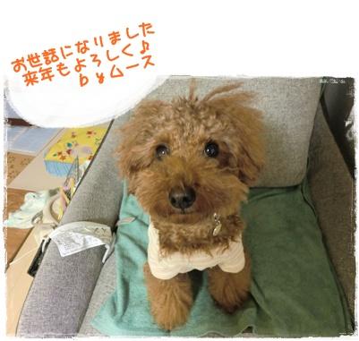 20101231blog1.jpg