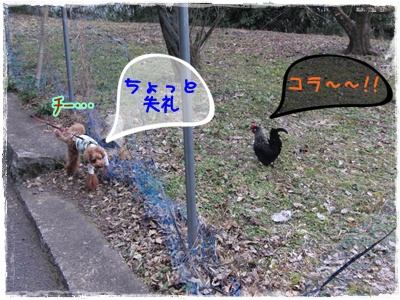 20110123blog5.jpg