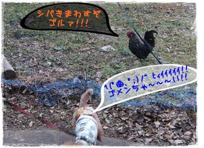 20110123blog6.jpg