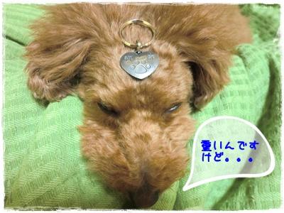 20110123blog9.jpg