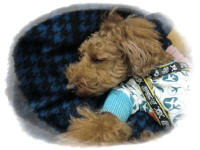 20110219blog10.jpg