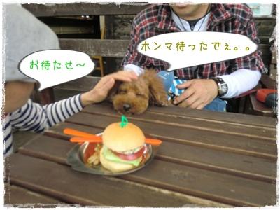 20110417blog25.jpg