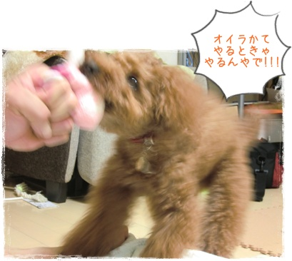 20110609blog6.jpg