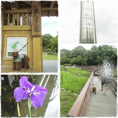 20110627blog7.jpg