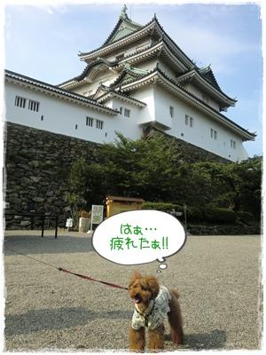 20110730blog4.jpg