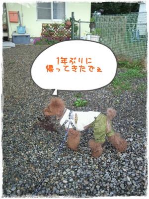 20110826blog53.jpg
