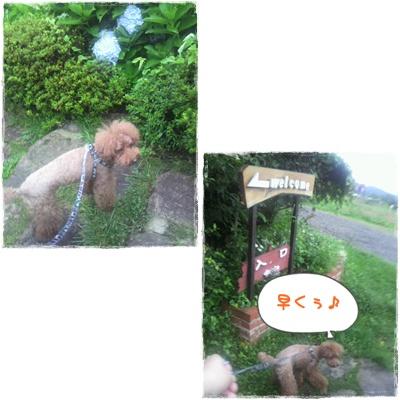 20110826blog62.jpg