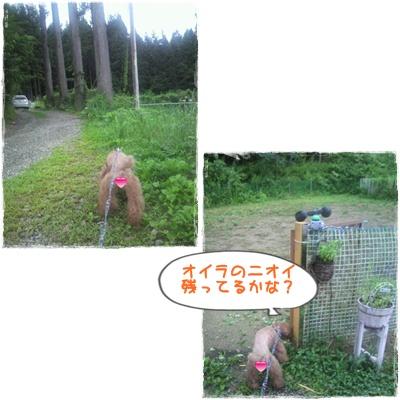 20110826blog63.jpg