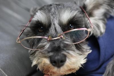 メガネの胡桃 015